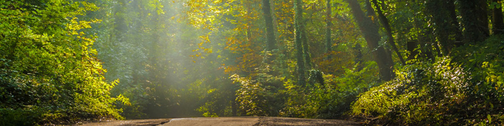 sunlight coming through forest and shining on dirt road