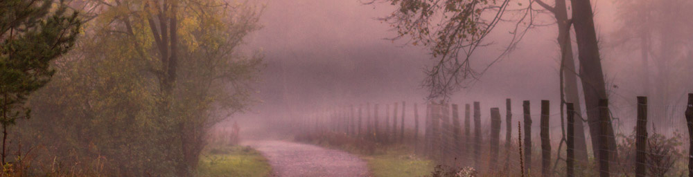 small dirt road with wooden fence posts and trees in the mist