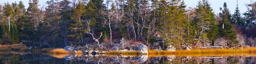 banner edge of lake rocks trees