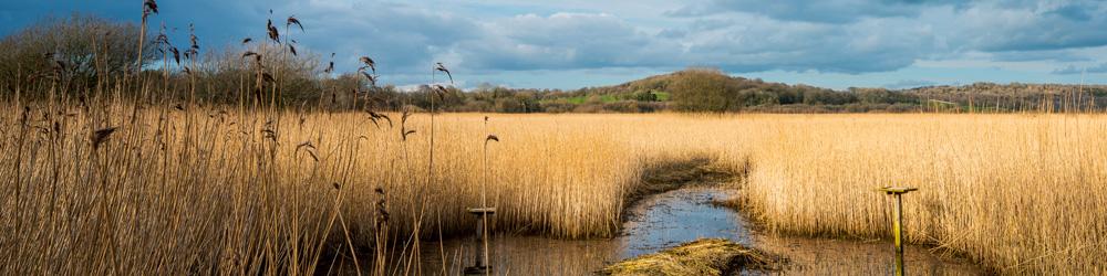 marshland banner